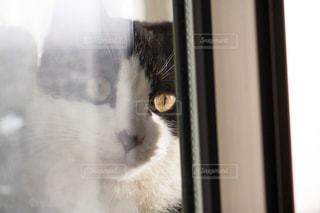 猫 - No.302974