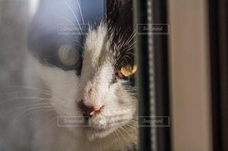 猫の写真・画像素材[302975]