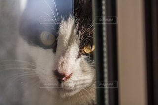 猫 - No.302975