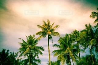 空の写真・画像素材[302976]