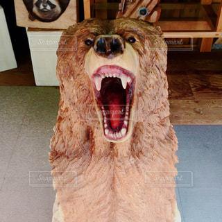 熊の写真・画像素材[693255]