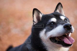 No.8445 犬