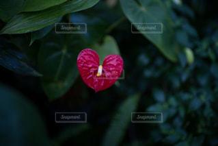 花の写真・画像素材[8443]