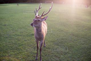 動物の写真・画像素材[8436]