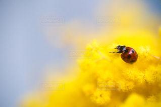 花の写真・画像素材[8422]