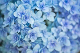 花の写真・画像素材[8421]