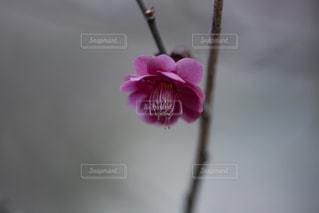 風景の写真・画像素材[8405]