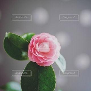 風景の写真・画像素材[8403]