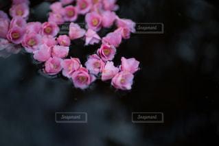 風景 - No.8398