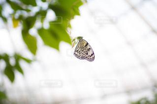 風景,かわいい,昆虫,羽,蝶々