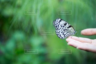 かわいい,手,昆虫,羽,蝶々