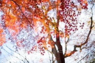 風景の写真・画像素材[8371]