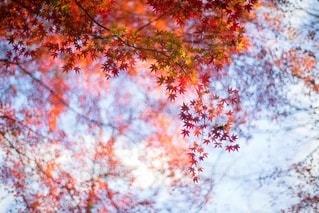 風景の写真・画像素材[8370]