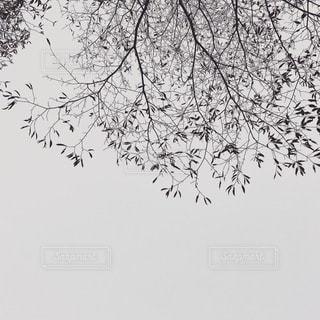 自然の写真・画像素材[8368]
