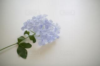 花の写真・画像素材[8363]