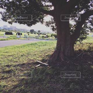 フィールドの大木の写真・画像素材[750725]