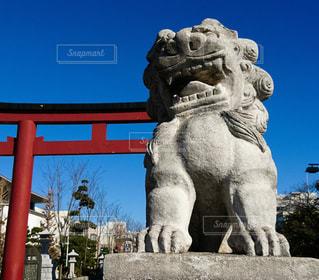 狛犬の写真・画像素材[310106]