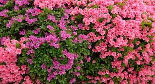 近くの花のアップの写真・画像素材[1134985]
