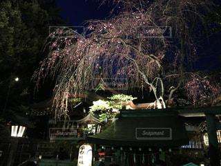 桜の写真・画像素材[419649]