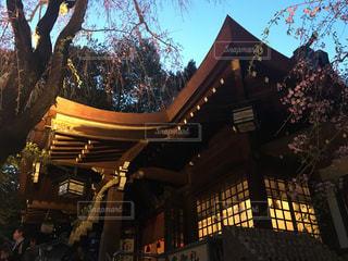 桜の写真・画像素材[419653]