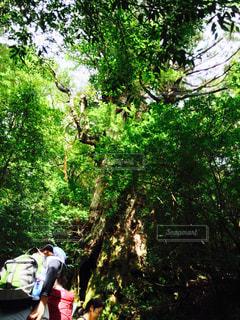森林の写真・画像素材[289864]