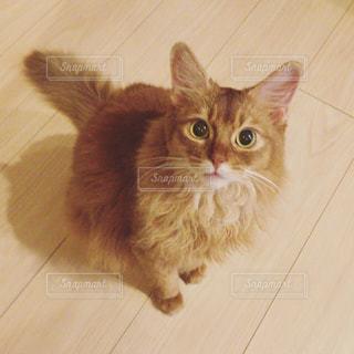 猫の写真・画像素材[701929]