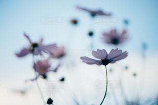 自然の写真・画像素材[290329]