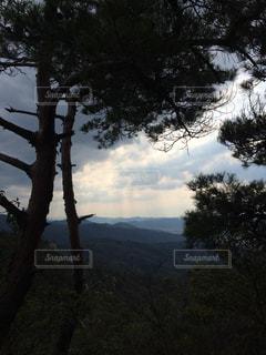 自然の写真・画像素材[290336]