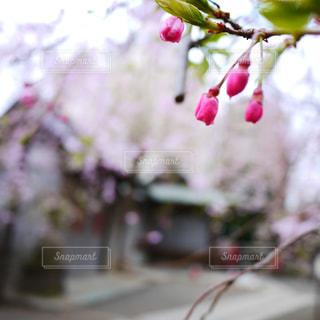 春 - No.316955