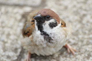 鳥の写真・画像素材[316962]