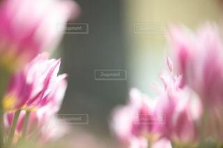 自然の写真・画像素材[3426]