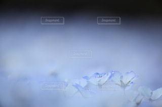 花の写真・画像素材[3427]