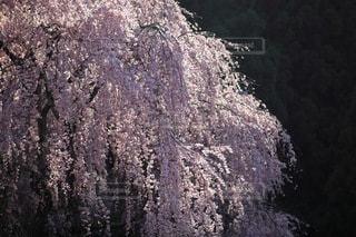自然の写真・画像素材[3423]