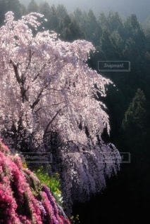 自然の写真・画像素材[3422]