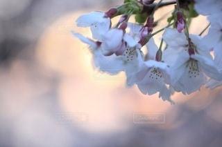 自然の写真・画像素材[3419]