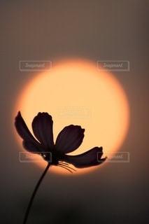 自然の写真・画像素材[3417]