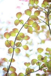 自然の写真・画像素材[3416]