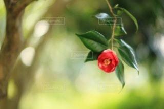 自然の写真・画像素材[3413]