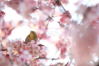 花の写真・画像素材[3409]