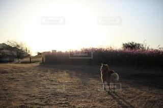 犬の写真・画像素材[3406]
