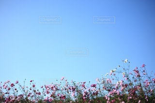 自然の写真・画像素材[3399]