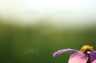花の写真・画像素材[3398]
