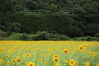 花の写真・画像素材[3394]