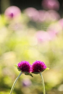花の写真・画像素材[3393]
