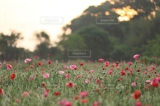 花の写真・画像素材[3389]