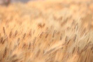 自然の写真・画像素材[3388]