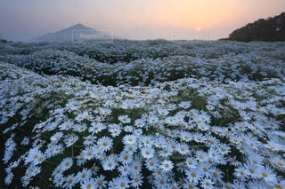 花の写真・画像素材[3387]