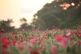 花の写真・画像素材[3384]