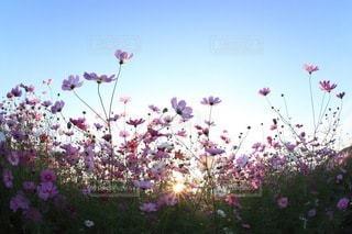 花の写真・画像素材[3379]