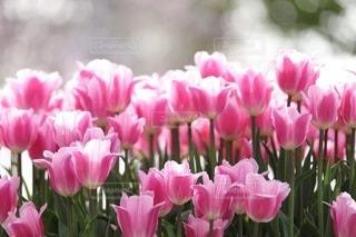 花の写真・画像素材[3377]